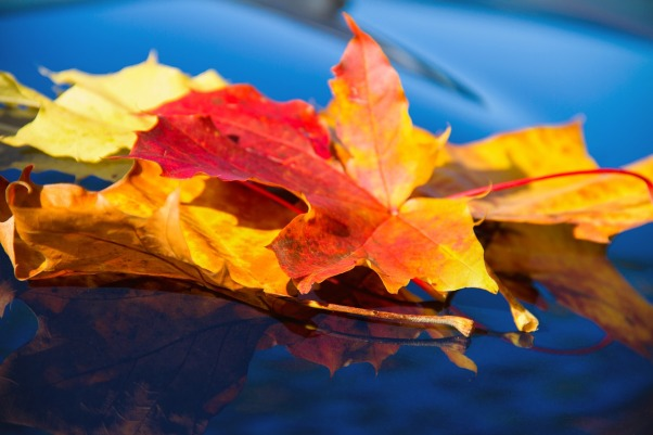 leaf-4465769_1280